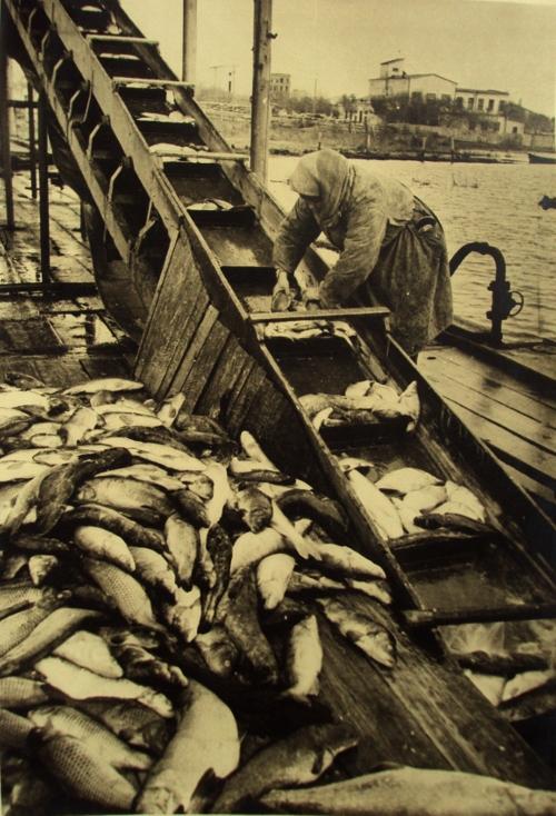 Fischaufzug zur Konservenfabrik
