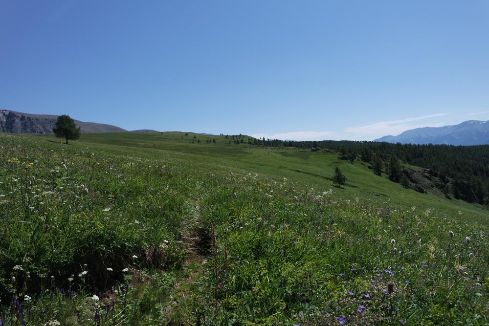 Sommerweide, ein Zauberwort, selbst aus dem Mund eines Viehzüchters