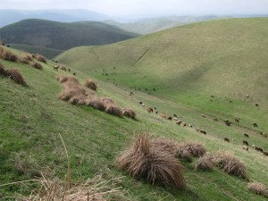 Hügellandschaft am 'alten Pferch' (Kuhna-Qutan) im Bezirk Temurmalik, Ende Februar