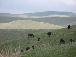 Die grünen Hügel von Temurmalik